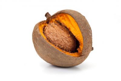 Abricot pays d finition et recettes de abricot pays supertoinette - Planter noyau d abricot ...