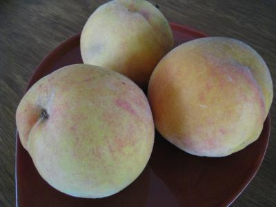 P ches brugnons et nectarines fiche p ches brugnons et nectarines et recettes de p ches - Peche a peau lisse ...