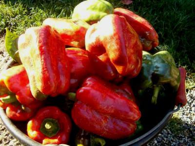Cuisine hongroise fiche cuisine hongroise et recettes de for Cuisine hongroise