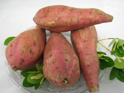 Pomme de terre fiche pomme de terre et recettes de pomme de terre sur supertoinette - Pomme de terre germee comestible ...