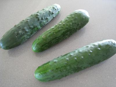 Concombre fiche concombre et recettes de concombre sur supertoinette - Variete de cornichon ...