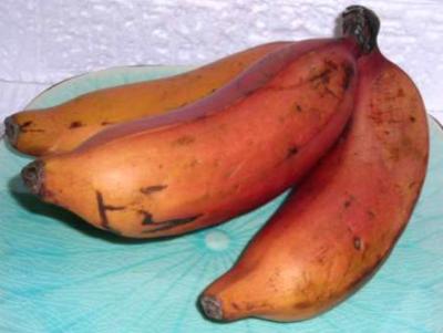Banane d finition et recettes de banane supertoinette for Abidjan net cuisine tantie rose